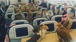 Ils voyagent dans un avion avec... 80