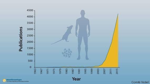 Prix Nobel de médecine: l'autophagie, cette déchetterie des cellules dont il faut empêcher la