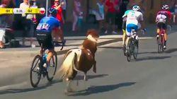 Ce poney téméraire a bien failli gagner l'avant-dernière étape du Tour de