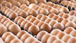 Des lots d'œufs contaminés à l'insecticide livrés en