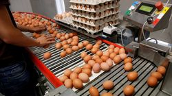 Les lots d'œufs contaminés au fipronil identifiés dans le