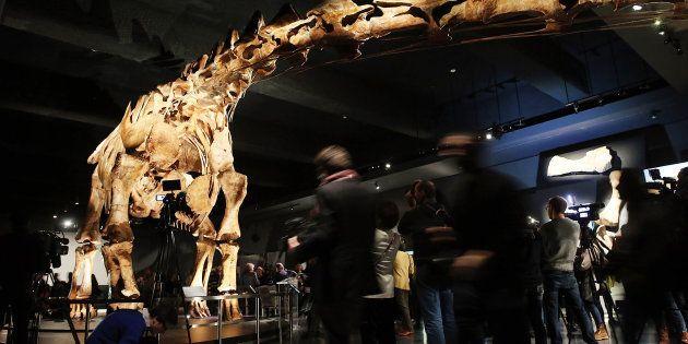 Le plus grand dinosaure a maintenant un