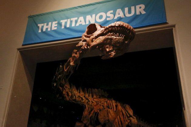 Le plus gros dinosaure ayant jamais vécu sur terre a enfin un