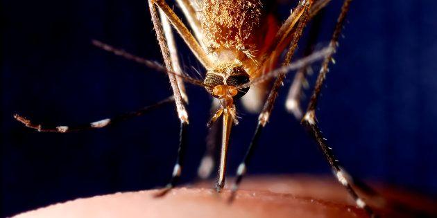 Le chikungunya est de retour en France: un cas contracté dans le