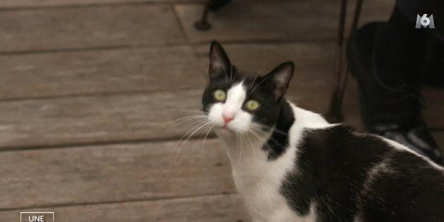 Ce chat a été l'autre star