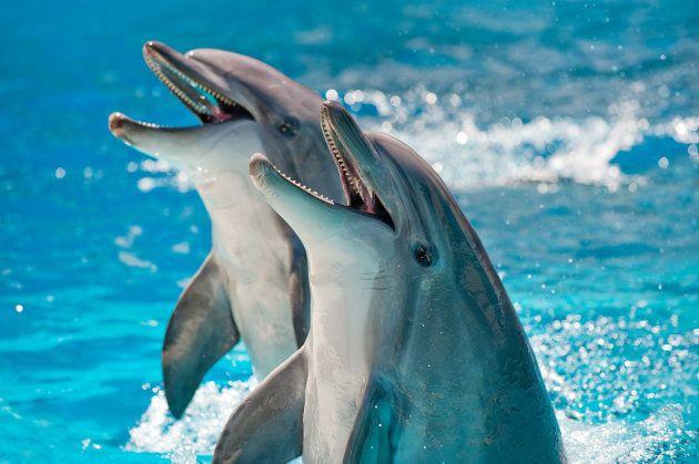 Les dauphins ont plus d'une centaine de
