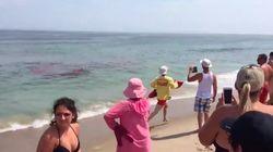 Grosse frayeur pour ces baigneurs alors qu'un requin dévore un phoque juste à côté