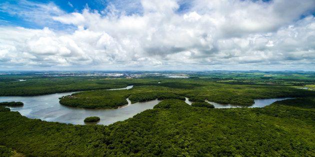 Le Brésil livre quatre millions d'hectares de forêt amazonienne à l'exploitation