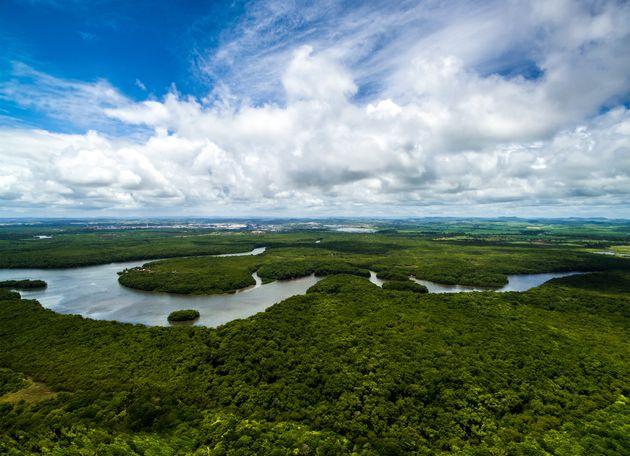 Forêt amazonienne : peut-on vraiment parler du
