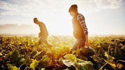 Comment la filière bio peut limiter le réchauffement