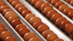 Après le fipronil, de l'amitraze dans les œufs contaminés? Les autorités