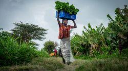 Simpliste votre solution miracle contre la faim dans le monde? La question qui fâche du HuffPost à cet