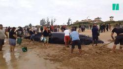 Pour sauver cette baleine échouée, des centaines de Brésiliens se