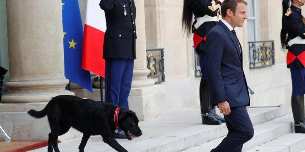 Emmanuel Macron sur le perron de l'Elysée en compagnie de son nouveau chien croisé labrador-griffon noir...