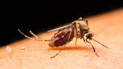 Un Japonais banni de Twitter pour une photo de moustique