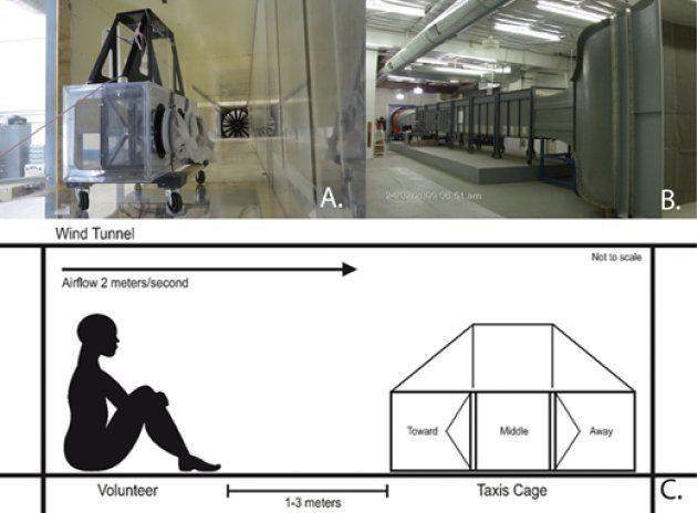 Des chercheurs se sont enfin penchés sur l'efficacité de la bougie à la