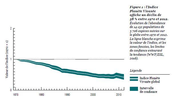 Entre 1970 et 2012, la Terre a perdu plus de la moitié de ses animaux vertébrés (et ça
