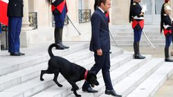 EXCLUSIF - La popularité de Macron dégringole encore en