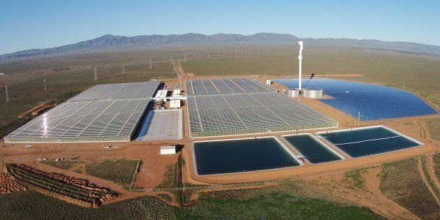La ferme solaire de Sundrop Farms en