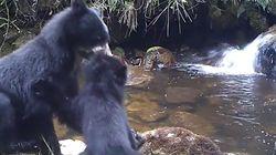 Cette maman ours et son petit à l'heure du bain vont vous rappeler quelque