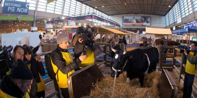 Des journalistes filment la vache mascotte de l'édition 2017 du Salon de l'Agriculture, Fine, le 24 février...
