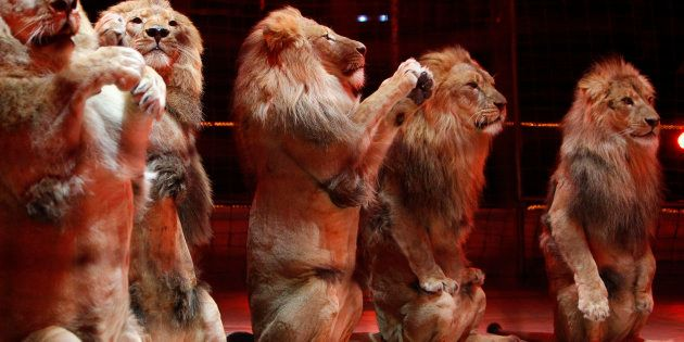 Les cirques français s'unissent
