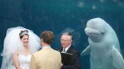Ce photobomb de mariage par un béluga vaut le