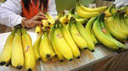 Les producteurs de bananes antillaises dénoncent la concurrence déloyale de