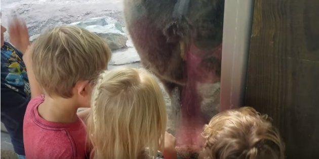 Les quatre enfants ont eu la surprise de voir l'ours déféquer sous leurs