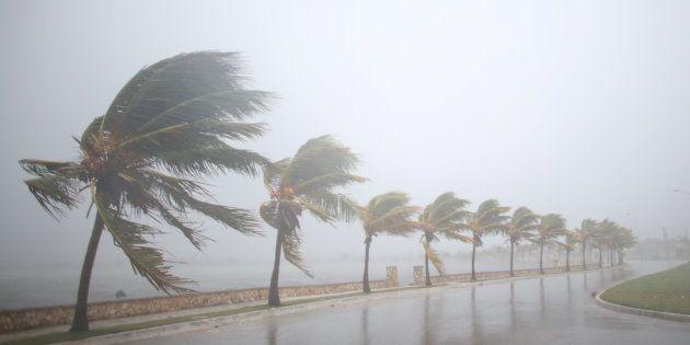 Des palmiers balayés par l'ouragan Irma à Cuba le 8 septembre