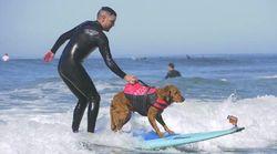 Ce chien surfeur a soigné une cinquantaine de vétérans de l'armée
