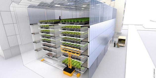 Voici la ferme de demain, urbaine, verticale et sans pesticide.