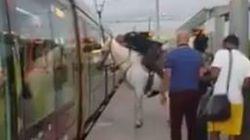 Il monte à cheval dans le tramway à