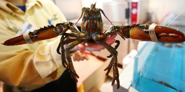 Les 30.000 plaintes adressées par Peta n'ont pas suffi à convaincre Monoprix d'arrêter la vente de homards