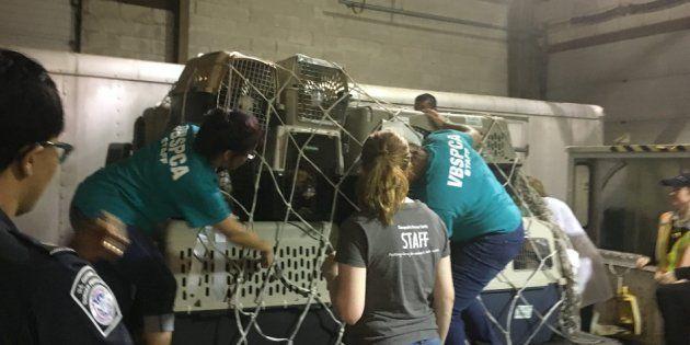 Sur chaque caisse transportant un animal était inscrit le message