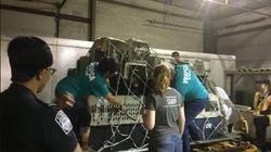 Pour échapper à l'ouragan Maria, elle fait voyager des centaines d'animaux en avion