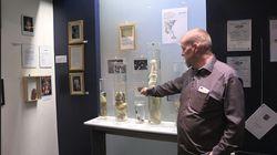 Savez-vous que vous pouvez visiter un musée du pénis à Reykjavik
