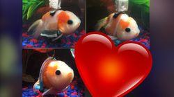Ce poisson rouge en