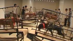 Trois œuvres avec des animaux vivants retirées du musée