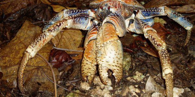 Un crabe des