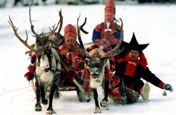 Des rennes tirant un traîneau de nomades Sami en février