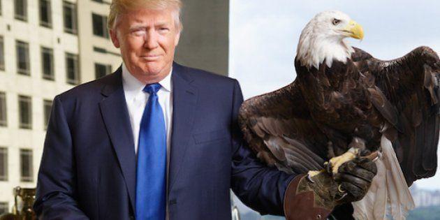 Les Américains qui chassent l'ours ou le loup en hélico peuvent remercier Donald