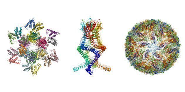 VIH, zika, Alzheimer... comment la découvert des prix Nobel de chimie a révolutionné la
