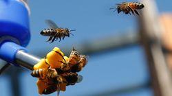 75% du miel mondial contient des pesticides qui déciment les