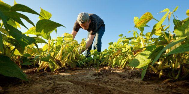 Seul François Fillon peut faire de l'agriculture un élément du redressement de la