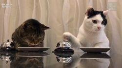 Plus de 200.000 personnes ont déjà vu la vidéo de ces chats à la fois mignons et