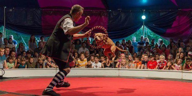 Ce cirque a remplacé lions et éléphants par des chiens sauvés de la maltraitance.