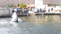 Une baleine coincée dans le port de Marseille, la police live-tweete le