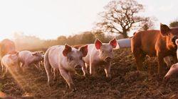 En France, les animaux font toujours partie de la catégorie juridique des