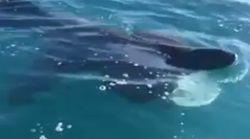 Ils croisent un requin pèlerin au large du Cap